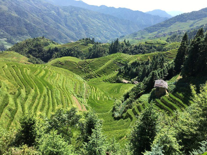 china-dag-9-guilin-rijstterrassen